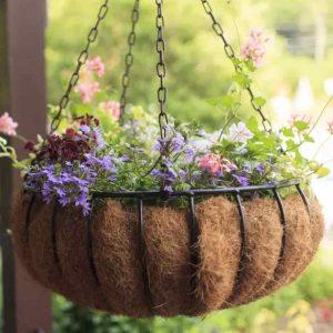 jenis tanaman hias yang cocok untuk dekorasi ruangan