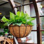 Pentingnya Memilih Pot Bunga Untuk Dekorasi Ruangan yang Menarik