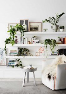 inspirasi tanaman hias untuk dekorasi ruang tamu yang menarik